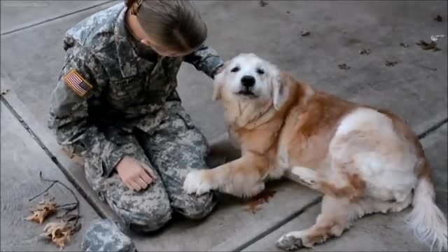 Watch Adorable Moment Senior Pup Realizes Her Soldier Owner Is Standing In Front of Her