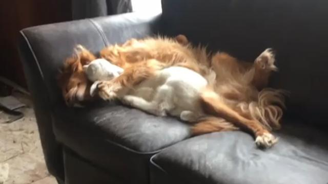 Farm dog & goat can't stop snuggling & the Internet is melting over adorable pics.