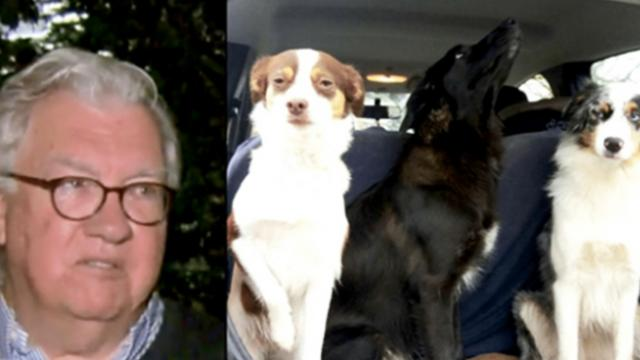 Man sees three dogs trapped in burning car–then it explodes