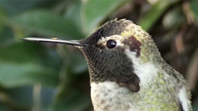 When this gorgeous humming bird moved his head I couldnt believe my eyes