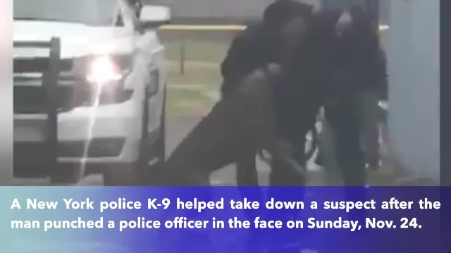 New York police K-9 takes down 23-year-old suspect who punched Orange County officer in the face