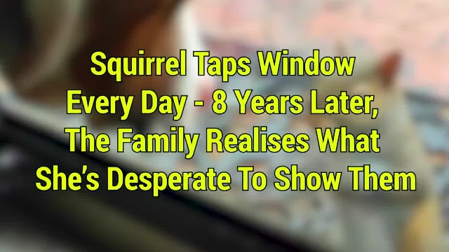 Squirrel taps window every day — 8 years on, the family realises what she's desperate to show them