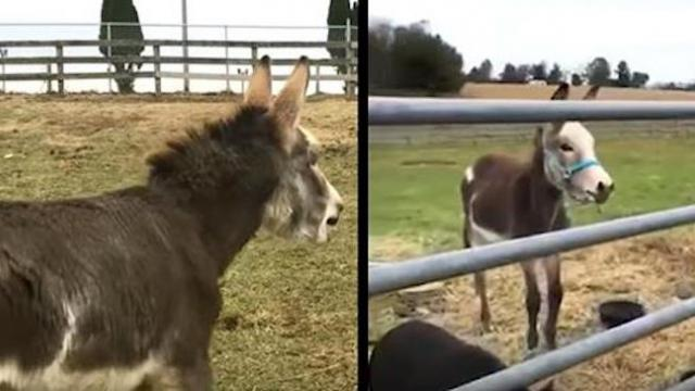 Baby donkey's missing mom only to have the sweetest reaction when he looks through gate