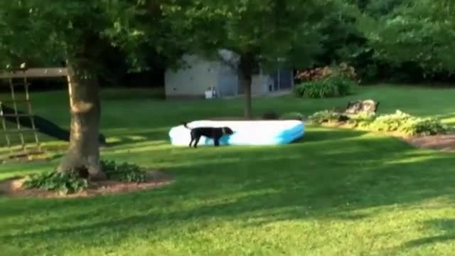 The kids hide under the kiddie pool, but what the dog does has everyone laughing!