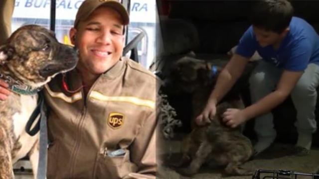 UPS driver made friends with a pit bull on his route, unaware the dog would change his life forever