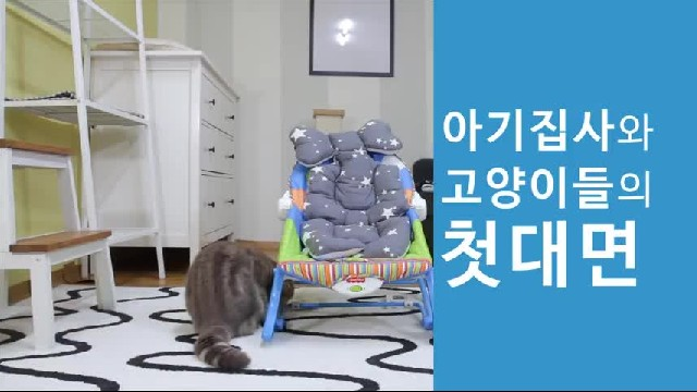 Look how these adorable cats react to the new baby, this is hilarious!
