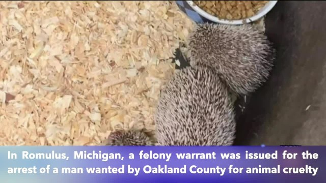 Warrant issued for a Michigan man wanted for hoarding of 500 exotic animals