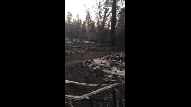 Video: Owner Breaks Down Crying When Cat Found Untouched by California Wildfire