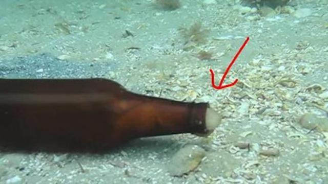 Diver sees glass bottle moving, captured footage of animal emerging goes viral