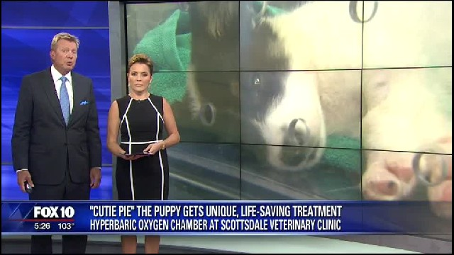 Puppy Gets Placed In Oxygen Chamber After She's Pronounced Dead. 5 Days Later, She Wakes Up