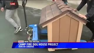 High School Students Make Doghouses For Pets Who Lost Their Homes To California Wildfires