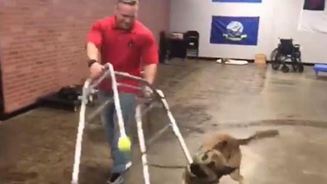 Would be service dog fails training exercises in cutest way possible