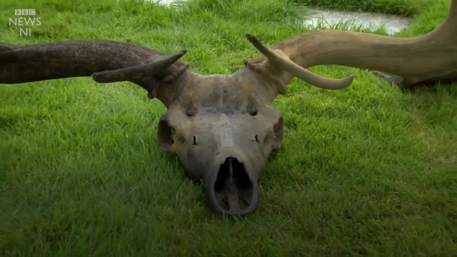 "Fishermen Discover A Massive 10,000-Year-Old ""Irish Elk"" Skull"