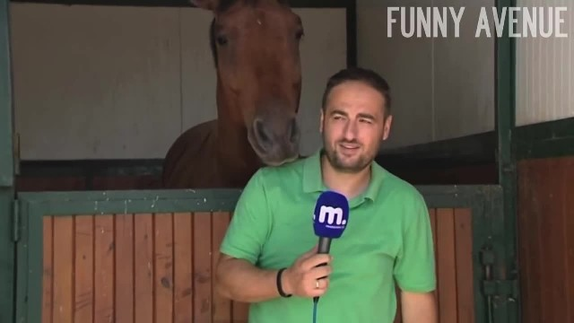 This man is recording a story. But what the horse does behind him has me dying of laughter!