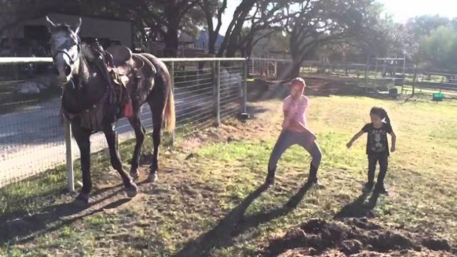 Little girls start dancing to popular song but it's the horse that has the internet losing it