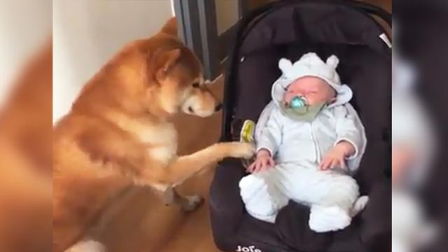 This nanny isn't just cute, but he's so caring that we can't help think how lucky this baby is!