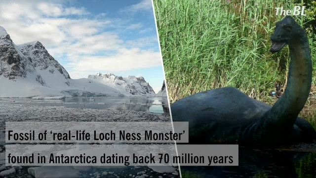 Fossil of 'real-life Loch Ness Monster' found in Antarctica dating back 70 million years