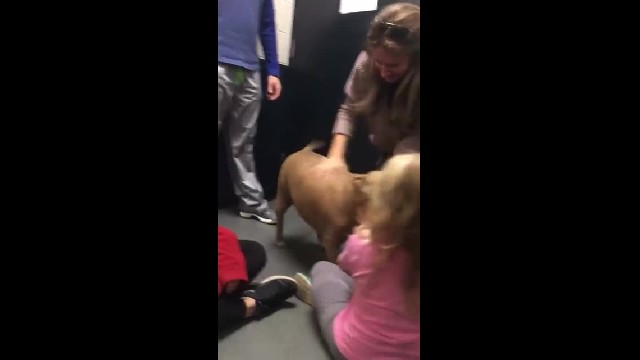 Depressed Pit Bull filmed 'Crying' at shelter after being used for breeding then dumped