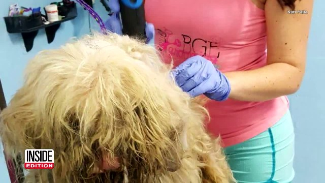She Puts Abandoned Dog In Car And Goes To Groomer At Midnight To Shave Off 2 Years Of Matted Fur