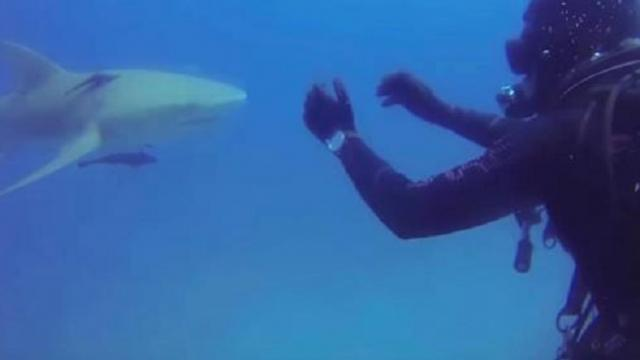 Diver is confused by shark's strange message, then he looks at