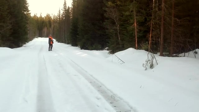 Swedish man comes face to face with a bear in the forest—he knew exactly what to do
