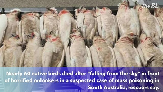 Birds are falling from the sky, bleeding from their eyes and beaks