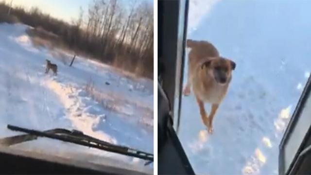 Bus driver makes special stop every day – to help a hungry dog