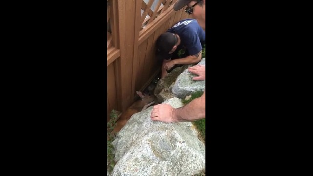 Rescuers Free Poor Deer Who Is Stuck Between a Rock and a Hard Place