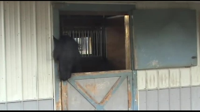 Horse kept disappearing, so they set up a camera to find out why… Now they know!!