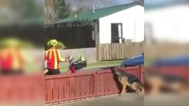 A hidden camera catches what a mailman does to a German Shepherd
