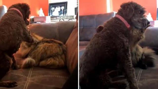 Woman captures heartwarming moment between her dog and cat