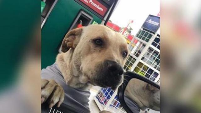 Stray dog adopted by gas station defends his new home during armed robbery