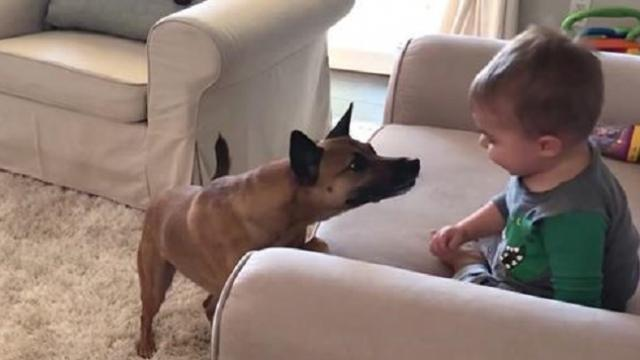 Dad films giggling toddler when family dog approaches prompting outcome dad didn't foresee