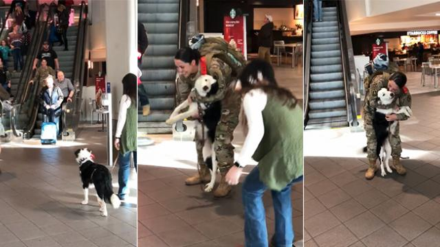 After being separated for 10 months, dog gives owner a homecoming that will leave you in tears