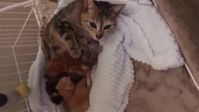 Stray cat comes back to find her kittens who were brought to the shelter