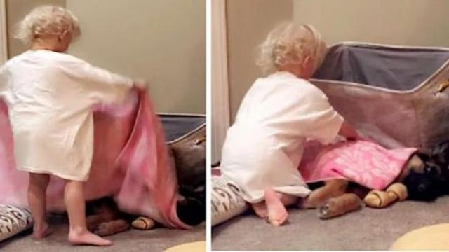 Kid makes sure to tuck in her best friend before bed