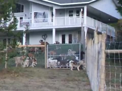 Man adopts 45 dogs, captures the moment he sets them free in their new home