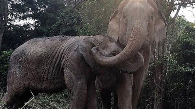 Elephant baby who was sold for tourist entertainment finally