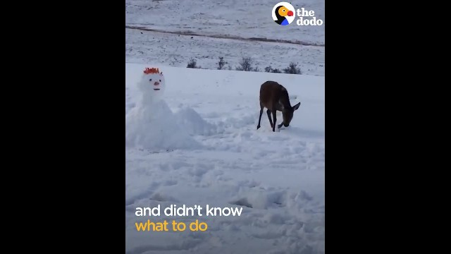 Snowman blocks deer's path, deer comes up with solution and wins the internet