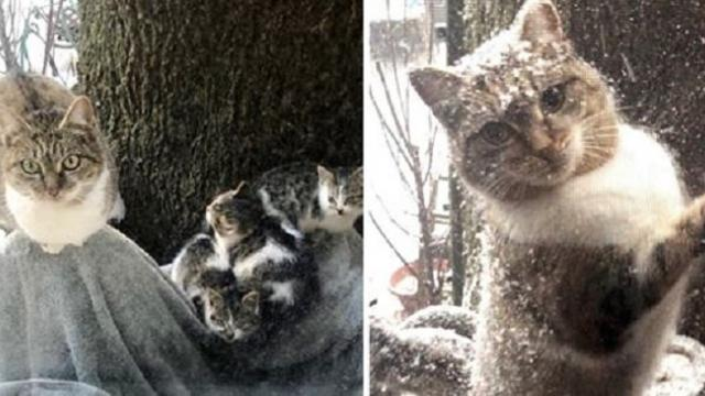 Stray Cat Left Her Kittens to Couple and Came Back This Week During Snow Squall