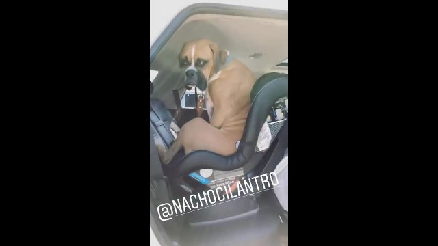"Mom tells dog to ""get out the car"" – his response has the internet in fits of laughter"