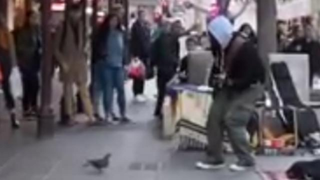 Busker can't believe it when pigeon steals show with hilarious dance moves.