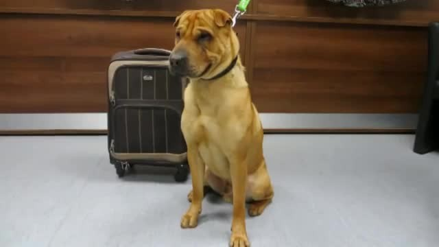 Sad dog is found left alone at train station tied to a luggage full of his favorite belongings
