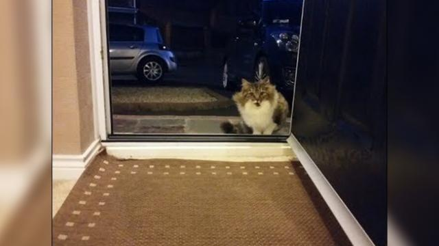 Stray cat begging to be let inside house, gives her new humans sweetest 'surprise' when they let her