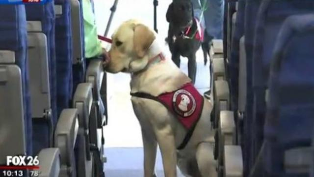 Woman's viral post tells us what to do if a service dog approaches you without an owner