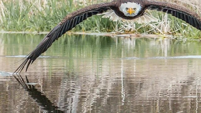 Eagle photo going viral after amateur photographer snaps the perfect shot