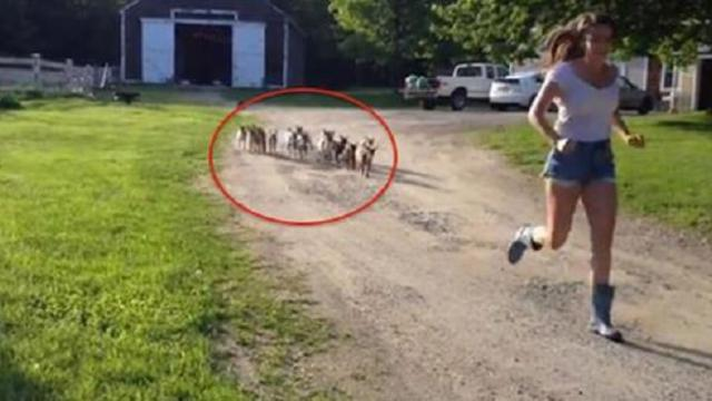 This stampede of baby goats might be the cutest thing you see today