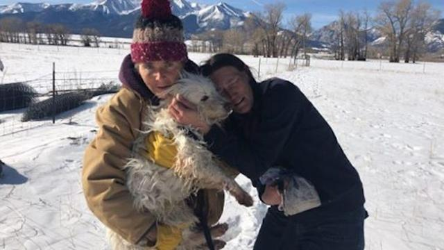 Colorado dog survives 96 days in wilderness, reunited with owner