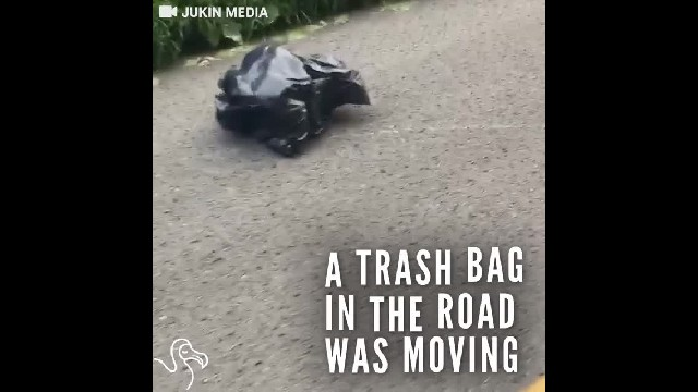 Kentucky woman notices a trash bag on side of road, then realizes—it's moving