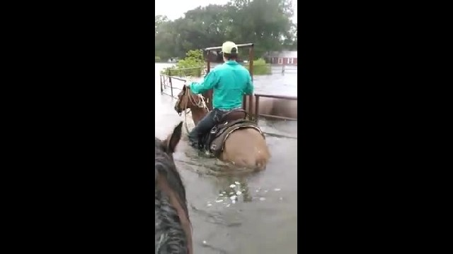 Horse trapped in pen panics as flood waters rise, then hero cowboy rides up 1